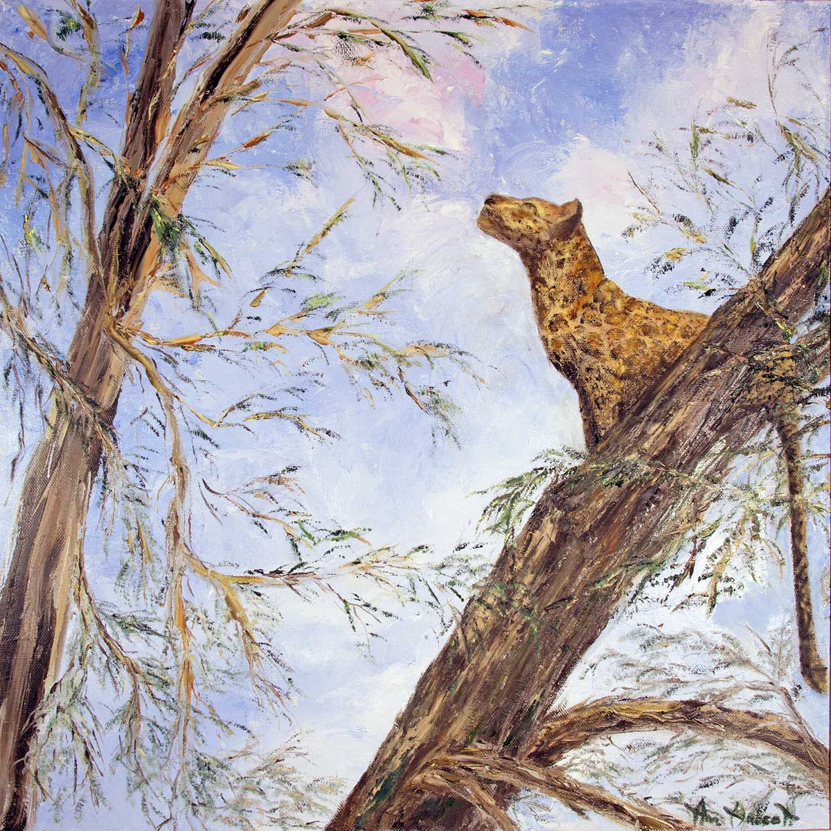 Leopard Gallery Nine